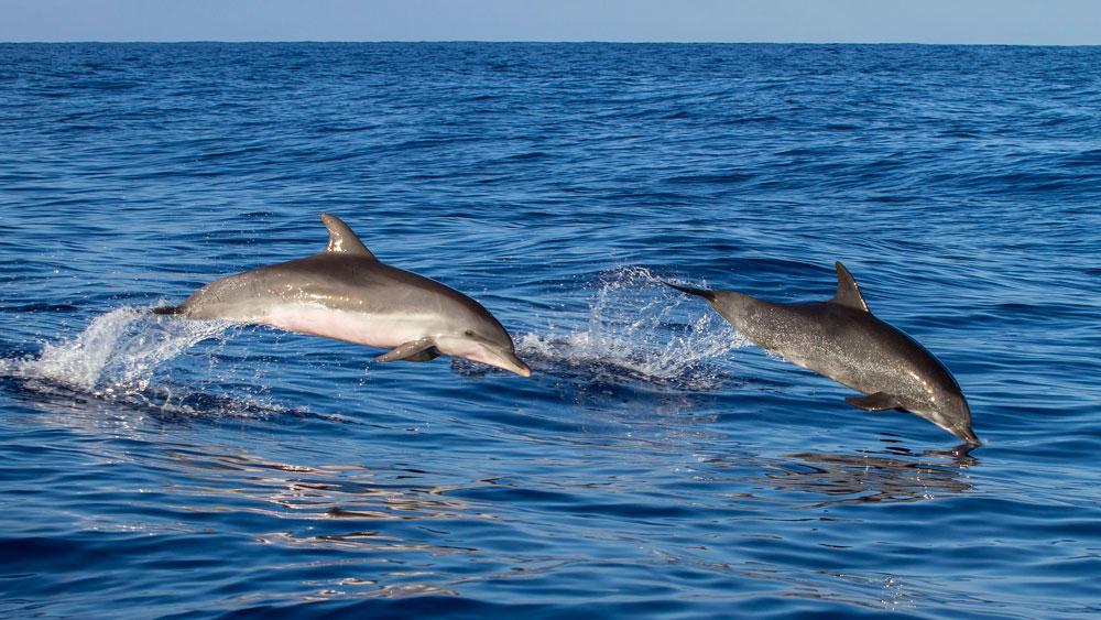 passeio de barco em florianópolis mares de floripa ilha da magia baía dos golfinhos ilha de anhatomirim